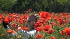 Colorful flowering poppy field in the area of Krasnodar. Russia. Stock Footage