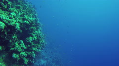Underwater diving corals fishes Red Sea Background Dahab Egypt 4k video - stock footage