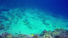 Underwater fishes on bottom near corals in Red Sea. Dahab. Egypt. 4k video. Stock Footage