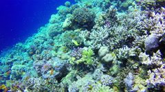 Underwater Background copyspace diving corals fishes Red Sea Egypt slow 4k video - stock footage
