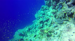 Underwater Background copyspace diving corals fishes Red Sea slow 4k video - stock footage