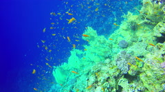 Underwater Background copyspace diving corals fishes hiding Red Sea 4k video - stock footage
