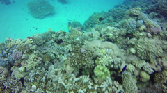 Underwater Background copyspace diving corals Red Sea Egypt 4k video - stock footage