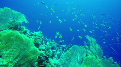 Underwater scene diving in corals with fishes Red Sea. Dahab. Egypt. 4k video Stock Footage