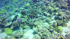Underwater diving in corals with red fishes in Red Sea. Dahab. Egypt. 4k video Stock Footage