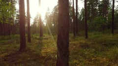 Walk in the summer forest.Slow motion footage. Steadicam shot. Animal view. Stock Footage
