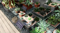 Succulent, greenhouse, Botanical Garden of MSU, Moscow Stock Footage
