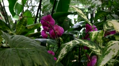 Orchid, greenhouse, subtropical plants, Botanical Garden of MSU, Moscow Stock Footage