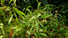subtropical plants, greenhouse, Botanical Garden of MSU, Moscow - stock footage