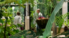 Tropical plants, greenhouse, Botanical Garden of MSU, Moscow Stock Footage