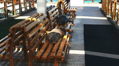 Two sea lions resting on a bench at the marina in puerto ayora Stock Footage