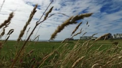 Upward motion pan over golf course, from ground level through wild grasses. Stock Footage