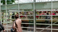 exhibition of irises and peonies, Botanical Garden of MSU, Moscow - stock footage