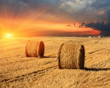 Hay rolls on farming field Stock Photos