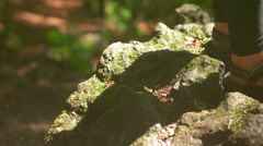 Traveler Standing on the Spotlight in the Woods - stock footage