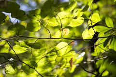 Light and shadows of leaves for backgrounds Stock Photos