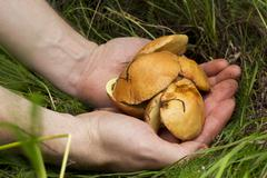 The edible mushrooms Stock Photos