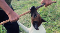 Dog hanging on a stick 7 Stock Footage