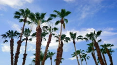 CALIFORNIA DATE PALMS, SHOT WITH TILT SHIFT Stock Footage