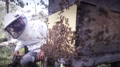 Hispanic Beekeeper collecting honey Stock Footage