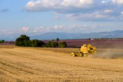 Harvester gathers the wheat crop - stock photo