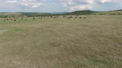 Pasture on a mountain plateau Stock Footage