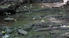 Babbling brook, small stream Stock Footage