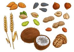 Nuts, grain and kernels vector sketch icons - stock illustration
