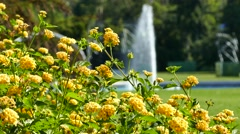 Beautiful Lantana flowers and fountain Stock Footage