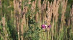 Wildflowers sways on a wind in the field Stock Footage