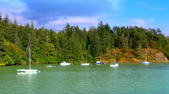 4K Moored Sailboats in Calm Pacific North West Coast Marine Harbor Stock Footage