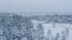 Aerial Shot of Frozen Lake Surrounded by Large Pine Forest Covered with Snow Stock Footage