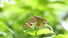 4K footage Butterfly in nature background Stock Footage