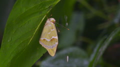 Butterfly avoiding the rain under a green leaf slow motion Stock Footage
