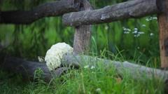 Bridal bouquet. The bride's bouquet. Bouquet of white Stock Footage