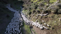 Sheep muster on high country New Zealand farm Stock Footage