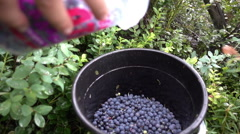 Collected a lot of blueberries in the forest Stock Footage