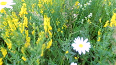 Camera moves with steadicam over thick grass and wild flowers. Stock Footage