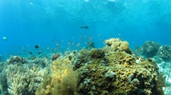 Underwater Coral Reef with Tropical Fish - stock footage