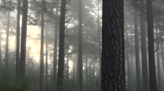 Misty forest in sweden nature Stock Footage