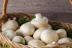 Edible raw mushrooms Stock Photos