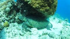 Turtle polishing shell Stock Footage