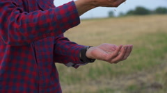 Farmer hands full of ripe wheat seeds after the harvest Stock Footage