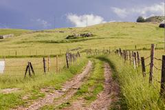 Idyllic scene of rural road near green pasture and scenic view of nature land - stock photo