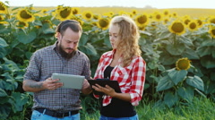 Farmer man and a woman has about a field of sunflowers. uses tablet. Woman takes Stock Footage