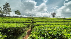Clouds over Green tea plantation landscape in Bandung, Indonesia. 4K Timelapse - Stock Footage