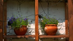 Purple flowers stand on a shelf in clay pots Stock Footage