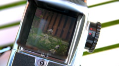 The flower in the camera viewfinder, Hasselblad Stock Footage