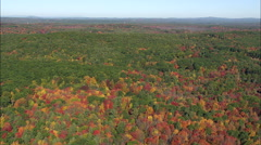 Woods In Fall Colours Stock Footage