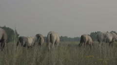 Group of horses on a summer pasture Stock Footage